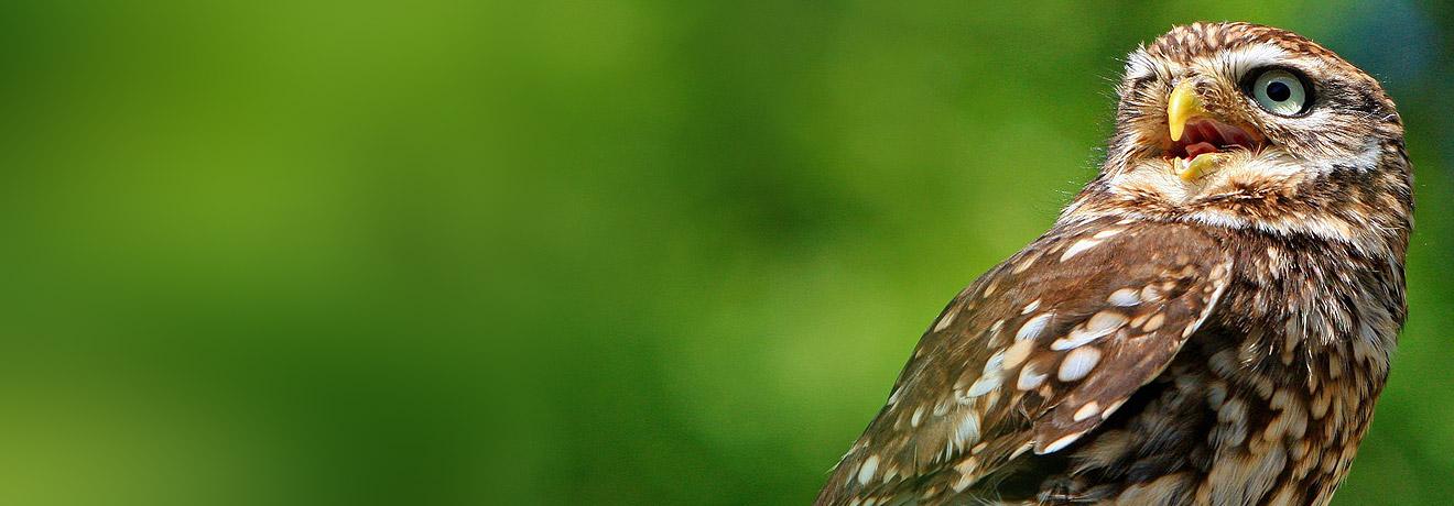 ochrona ptaków przed kolizjami